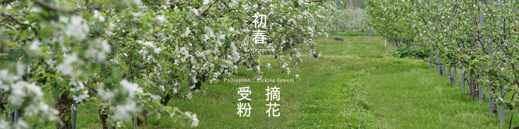 春 摘花 受粉