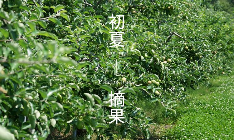 初夏 摘果