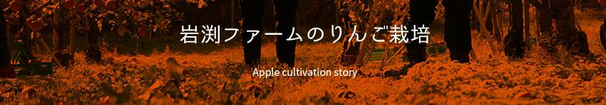 岩渕ファームのりんご栽培 Apple cultivation story