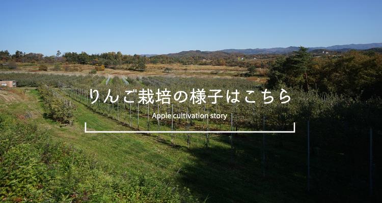 りんご栽培の様子はこちら Apple cultivation story