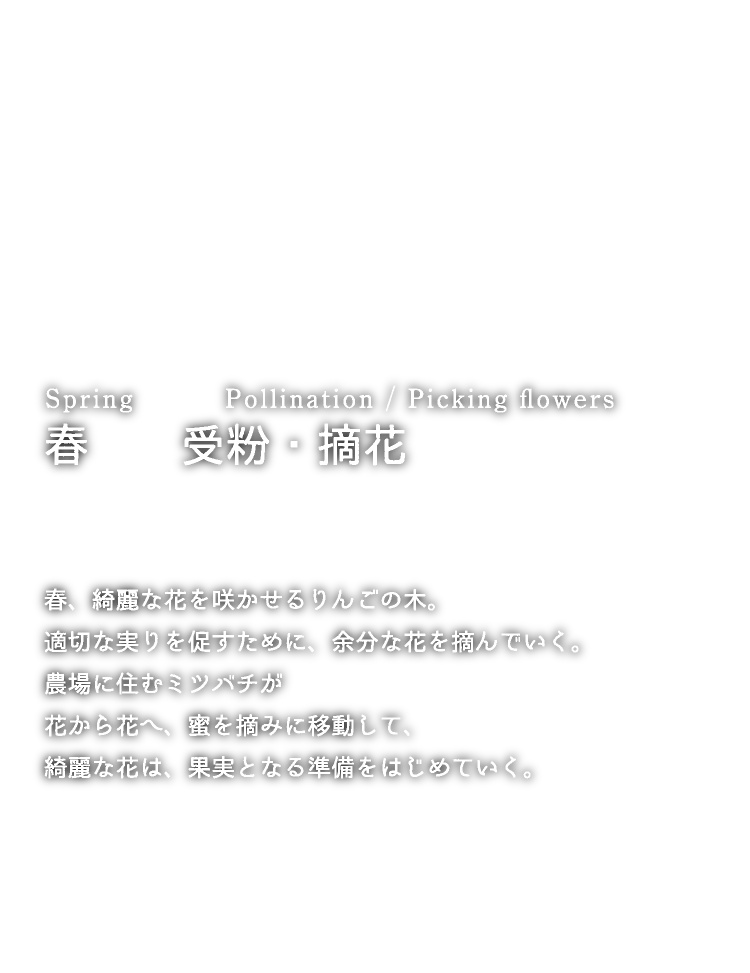 Spring Pollination / Picking flowers 春 受粉・摘花